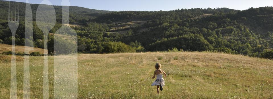 VinoSole-grasveld